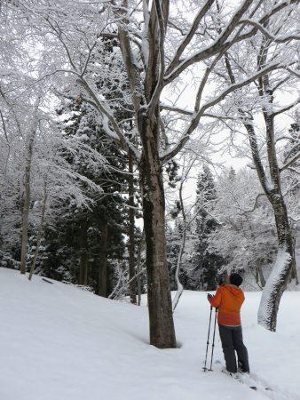 ツリークライミングで使用する木